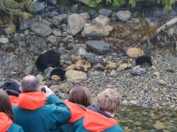 Bear Watching off NANUQ 1