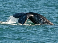 Photo of the Week: Day 2 of the 25th Annual Pacific Rim Whale Festival