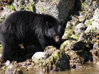 Photo of the Wee: Big Mama on bear watch tour