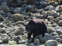 Photo of the Week: Black Bear