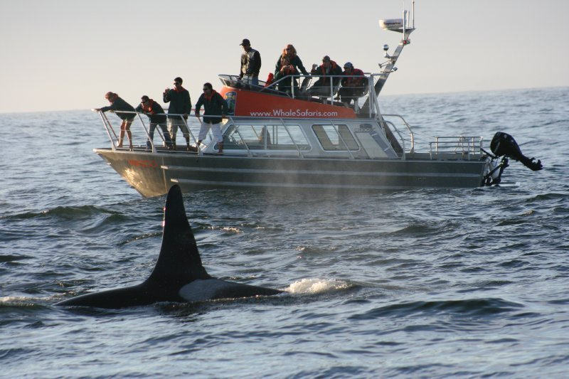WASCO - 12 Passenger Vessel with Orcas