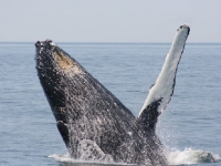 Whale Watching Images