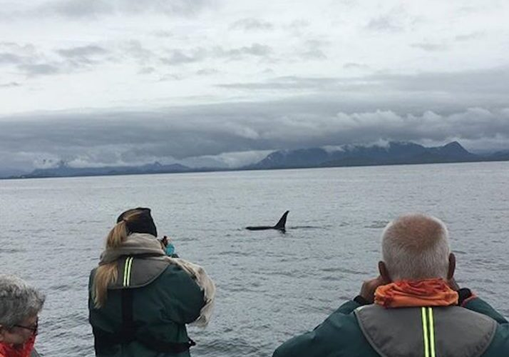 Whale watching tour passengers orca sighting