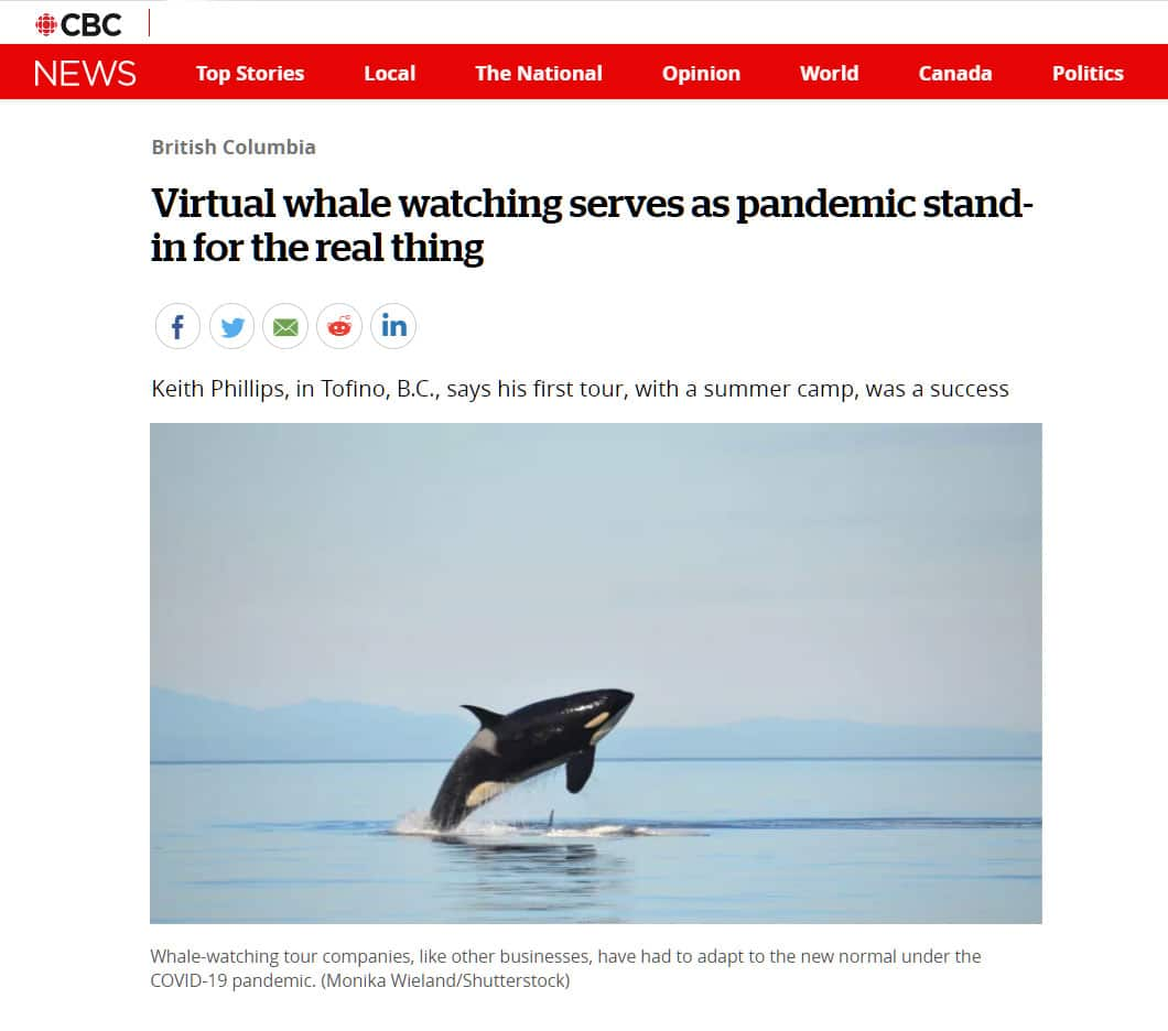 accessible whale tours tofino